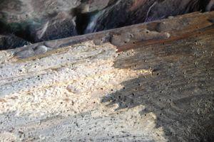 Drewno jako źródło pokarmu dla owadów