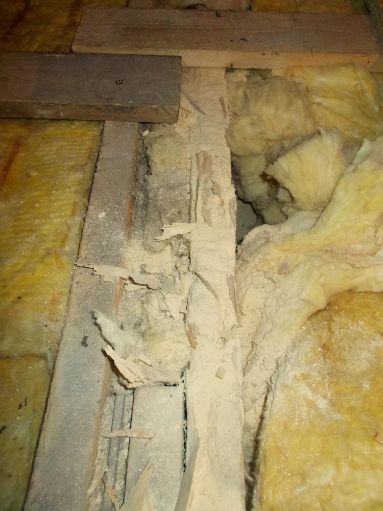 Drewno w dachu zniszczone przez korniki