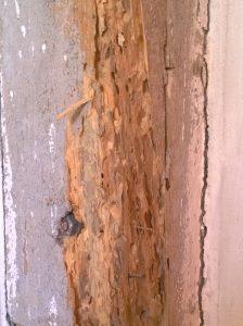 Drewno uszkodzone przez szkodniki drewna